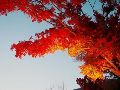 富士河口湖の紅葉