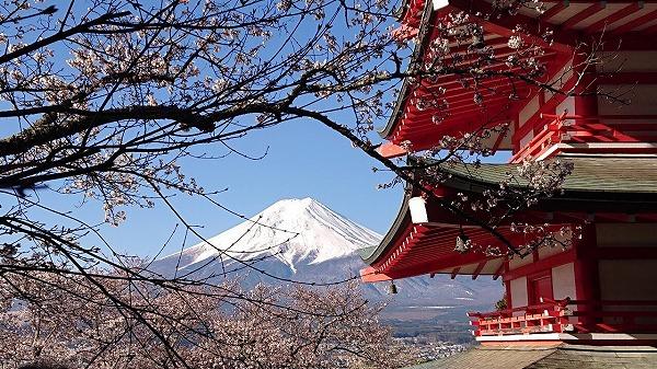 浅間公園からみた富士山と桜と塔