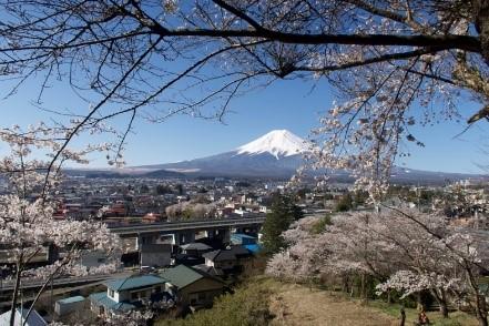 冨士山と桜