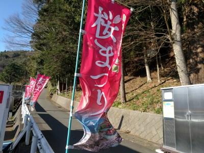 桜祭りノボリ